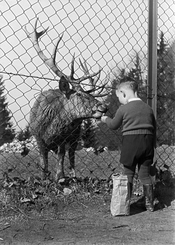 Eröffnung Wildpark Peter und Paul | Jahr 1892